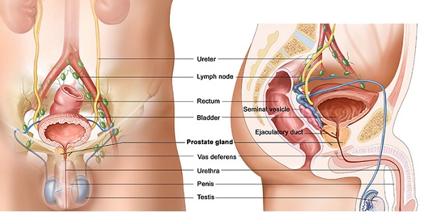Photo of 6 öneri sizi Prostat kanserinden korumak için