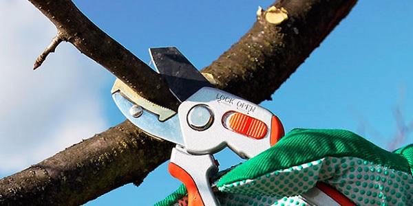 Photo of Budama işlemlerinin meyve ağaçlarında genel kuralları
